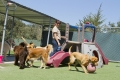 Dog Daycare Twin Cities